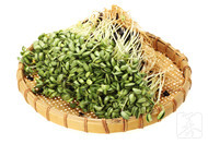 黄豆芽与什么食物相克?