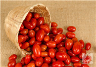孕妇能吃小番茄吗早期