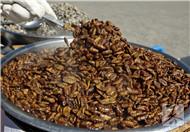 蚕的粪便有什么作用