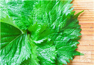 苏子籽的功效与作用及禁忌