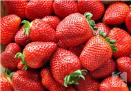 草莓洗完怎么保存