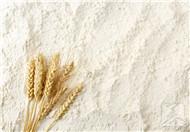 面粉保质期一般是多久