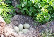 便蛋吃多了有什么坏处