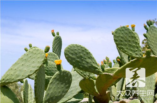 Cactus is spent how edible method