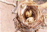 炸麻雀为什么不能多吃呢