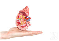 """腎病是""""拖""""出來的 4種現象腎臟恐已透支"""