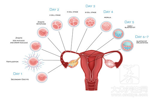 Does left oviduct jam how be pregnant to do?