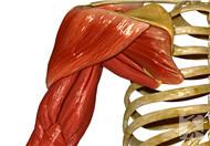 练肩部肌肉最佳的动作