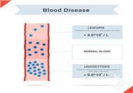 细胞衰老的特征口诀