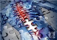 脊柱的连接方式