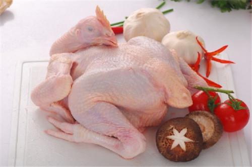 怀孕可以吃母鸡吗