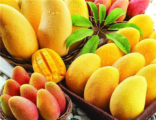 Be pregnant can eat mango