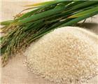 怀孕可以吃籼米吗?怀孕吃什么比较好